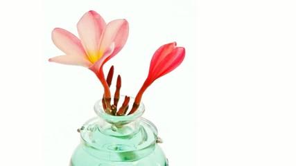 Zoom avant sur une fleur de frangipanier
