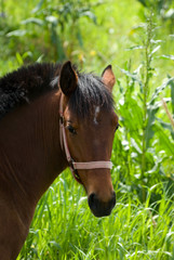 headshot for horse on background blurred lush vegetation