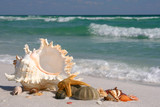 Shells, Sea Star and Sea Urchin on the Beach, wide angle