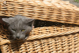 Cat in the braiding basket poster