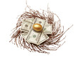 Nest egg of cash & gold egg