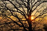 Pianta al tramonto poster