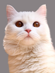 White funny cat