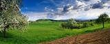 Fototapety Spring landscape - green fields, the blue sky
