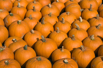 Pumpkin background