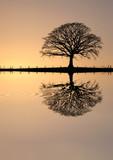 Fototapety Winter Oak Tree at Sunset