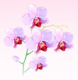Fototapety Orchids