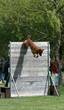 chien,berger,belge,malinois,dressage,obstacle,hauteur