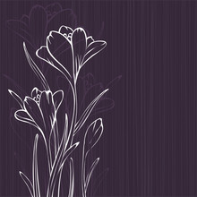 Lilac design with crocus silhouettes