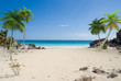 plage et palmier