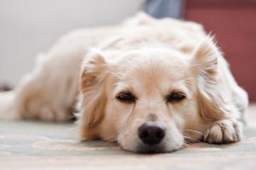 portrait of a sleeping dog