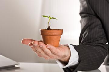 Hand hält Blumentopf mit kleiner Pflanze in einem Büro