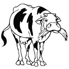 mucca gnam