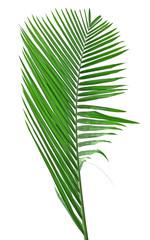 une palme verte sur un fond blanc
