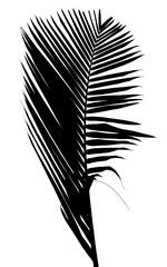palme noire sur fond blanc