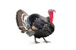turkey - 13744475