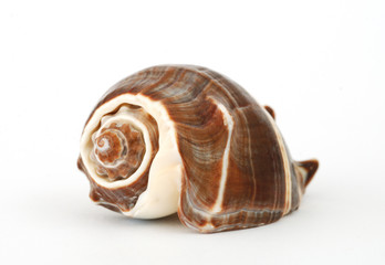 a seashell on white background