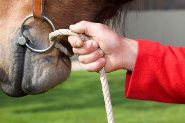 horse of contest