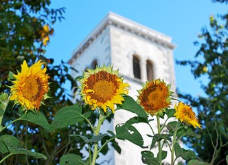 Sunflowers and tower
