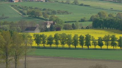 château et champ de colza