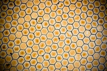 Honeycomb Textured Background