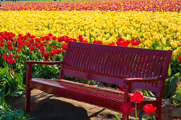 Red bench among tulip fields