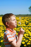 Little boy is blowing dandelion.