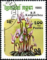 Kampuchea. Cyclamen. Timbre postal.
