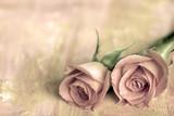 zwei rosen - 13808846