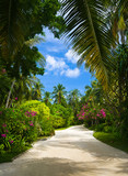 Pathway in tropical park poster