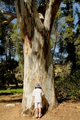 Boy with face against a large Tree