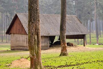 Architektur im Wald