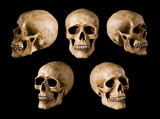 synthetical skull many angle view on black with clipping path poster