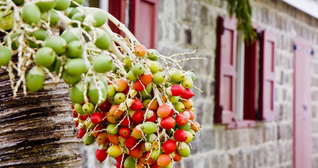 Green and Orange Berries by Old Building