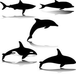 animal in sea illustration