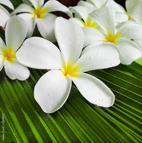 flowers spa