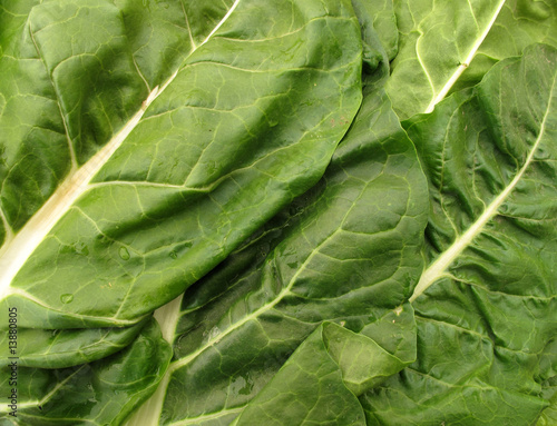 Swiss chard fresh leaves