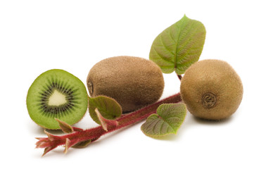 kiwi fruits and plants on white background