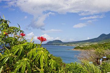 Flowers on Hilly Coast
