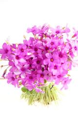 Fiore di trifoglio