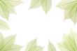 Composition nervures feuilles vertes