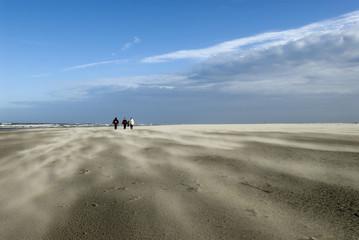 stormy Schiermonnikoog beach