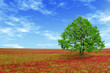 Green tree in red field