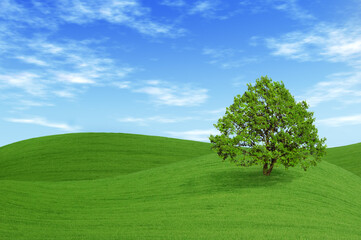 Green tree in the field
