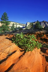 Desert plant life with mountainous backdrop