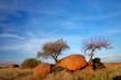 Granite boulders, trees and blue sky, Namibia