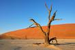 Dead tree, red sand dune, blue sky, Sossusvlei, Namibia
