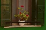 Flowers on Window Sill Island of Burano Venetian Lagoon Italy poster