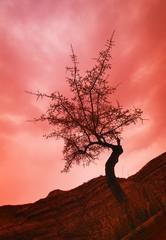 Silhouette of shrub tree
