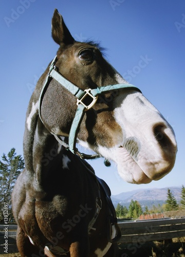 Portrait of a horse with harness